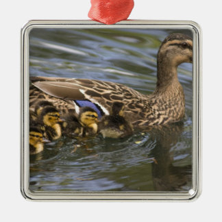 Mallard Duck female and chicksAnas Christmas Ornament