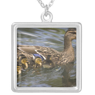 Mallard Duck female and chicksAnas Silver Plated Necklace