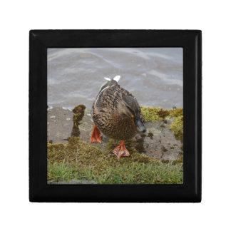 Mallard Duck Jewelry Box