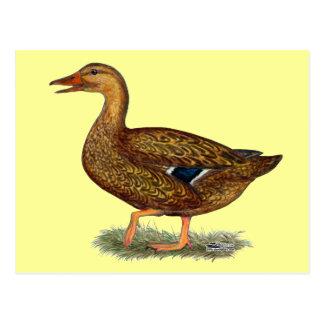 Mallard Duck Hen Postcard