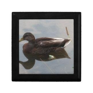 Mallard duck in the water small square gift box