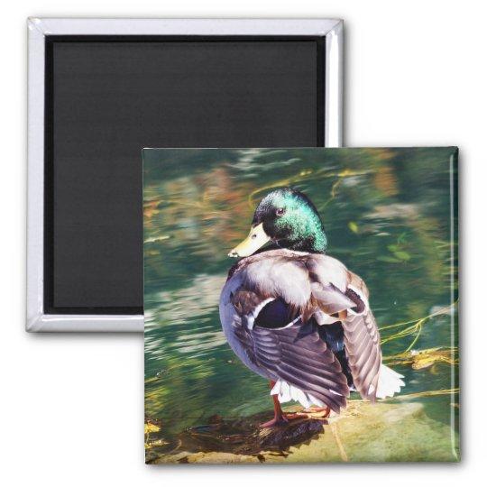 Mallard Duck Magnet