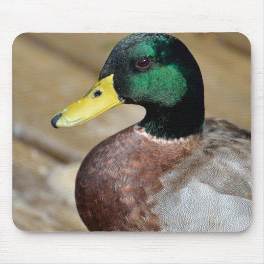 Mallard Duck Mouse Mat
