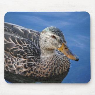 Mallard Duck on a Pond Mousepad