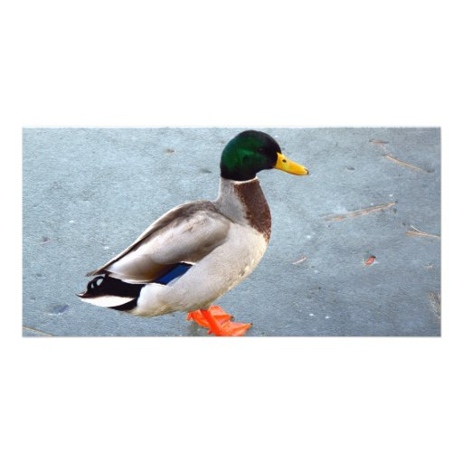 Mallard Duck On Ice Photo Greeting Card