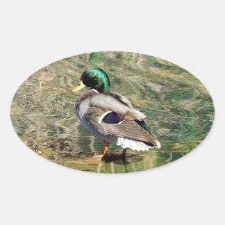 Mallard Duck Oval Shaped Sticker