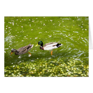 Mallard Duck Pair Card