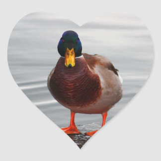 Mallard Duck Photo Heart Sticker