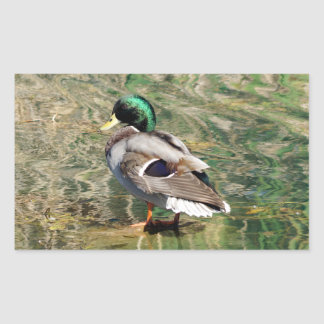 Mallard Duck Rectangle Sticker