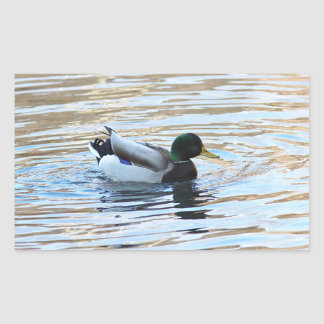 Mallard duck rectangular sticker