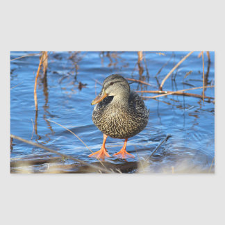 Mallard duck rectangular sticker