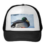 Mallard duck, Rideau River, Ottawa, Ontario, Canad Mesh Hats