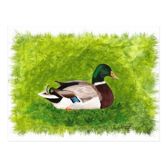 Mallard Duck Sitting in the Grass Postcards