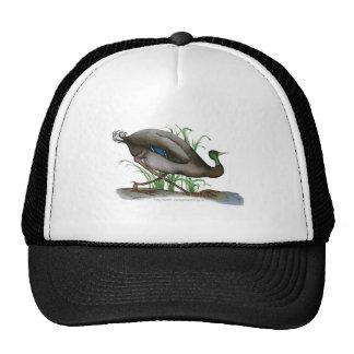 mallard duck - wild bird, tony fernandes cap