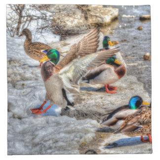 Mallard Duck Wildlife Photo for Bird-lovers Napkins