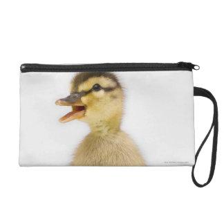 Mallard duckling (Anas platyrhynchos) Wristlet