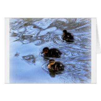 Mallard Ducklings Card