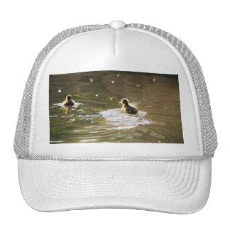 Mallard Ducklings Hat