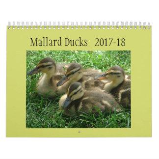 Mallard Ducklings Wall Calendar