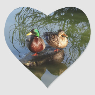Mallard Ducks #2 Stickers