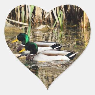 Mallard Ducks Heart Shaped Sticker