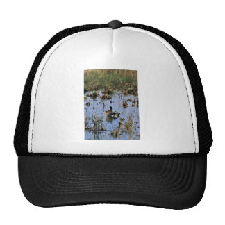 Mallard ducks in a Wetland Mesh Hats