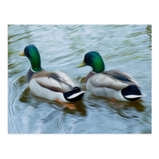 Mallard Ducks Postcard