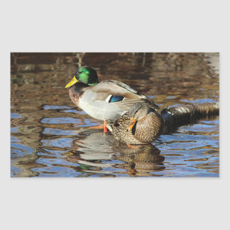 Mallard ducks rectangular sticker
