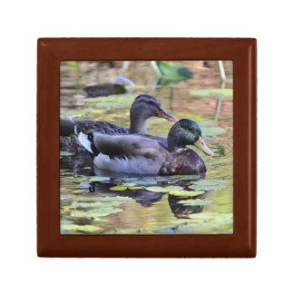 Mallard ducks small square gift box