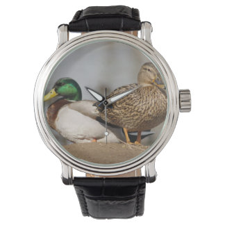Mallard Ducks Watch