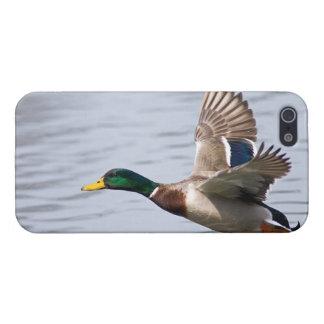 Mallard in Flight -Skinit iPhone 5 Case