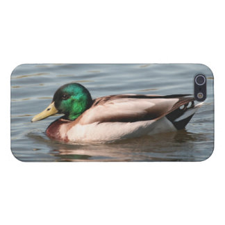 Mallard iPhone Cover - Savvy Case For iPhone 5/5S
