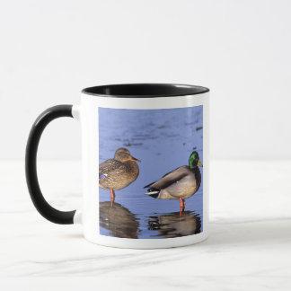 Mallard pair Canada, north america Mug