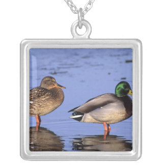 Mallard pair Canada, north america Silver Plated Necklace