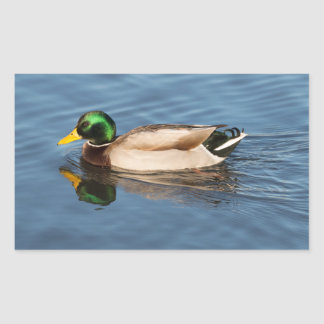 Mallard Rectangular Sticker