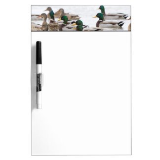 Mallards in wetland in winter Dry-Erase whiteboards