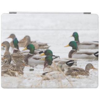 Mallards in wetland in winter iPad cover