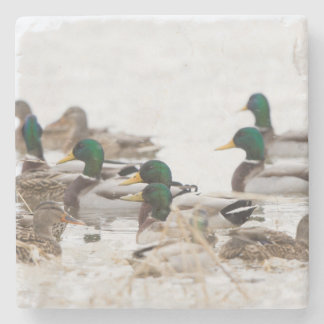 Mallards in wetland in winter stone beverage coaster
