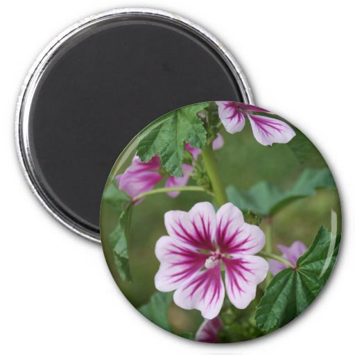 Mallow 1 6 cm round magnet