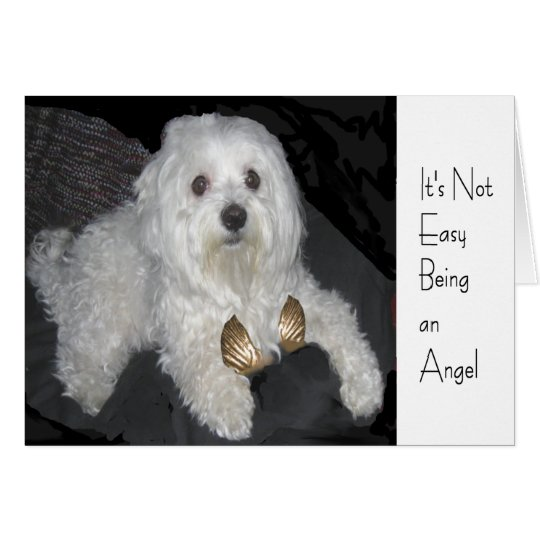 Maltese Angel Humour Greeting Card for Anyone