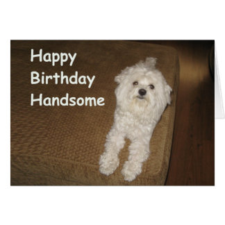 Maltese Birthday Wishes for Him Greeting Card