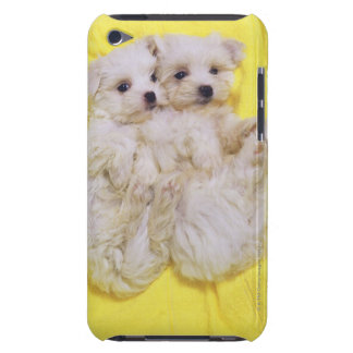 Maltese Dog; is a small breed of white dog that 2 Barely There iPod Cases