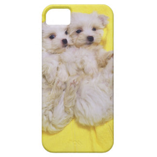 Maltese Dog; is a small breed of white dog that 2 Case For The iPhone 5