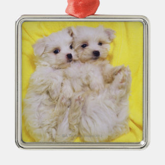 Maltese Dog; is a small breed of white dog that 2 Christmas Ornament