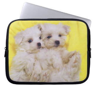 Maltese Dog; is a small breed of white dog that 2 Laptop Sleeve