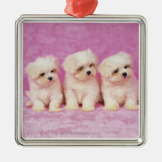 Maltese Dog; is a small breed of white dog that Christmas Ornament