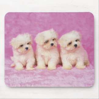 Maltese Dog; is a small breed of white dog that Mouse Mat