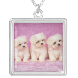 Maltese Dog; is a small breed of white dog that Square Pendant Necklace