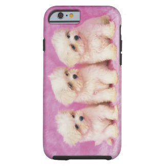 Maltese Dog; is a small breed of white dog Tough iPhone 6 Case