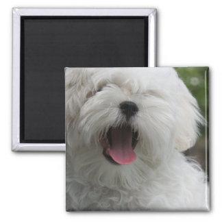 Maltese Dog Magnet